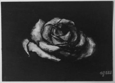 Rose (beschikbaar)
