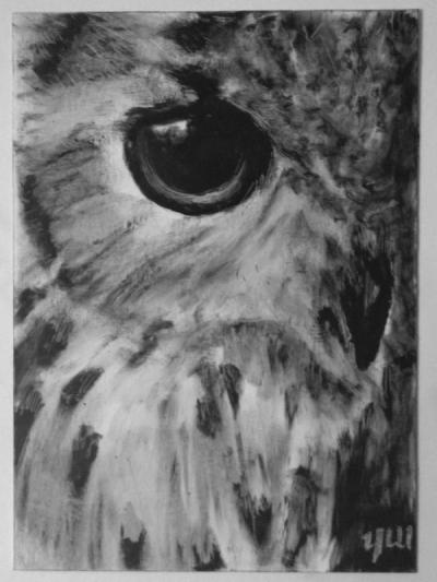 Snow Owl (beschikbaar)